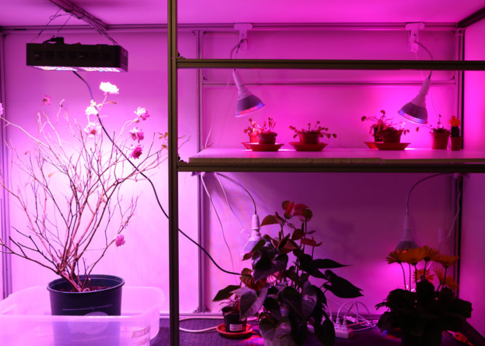 Greetings, this is Elowan: MIT presents the first cybernetic plant