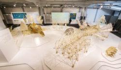 Arte e ingegneria, le sculture cinetiche di Theo Jansen in…