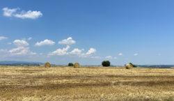Assegnate le Spighe Verdi 2020 per i comuni rurali: Marche…