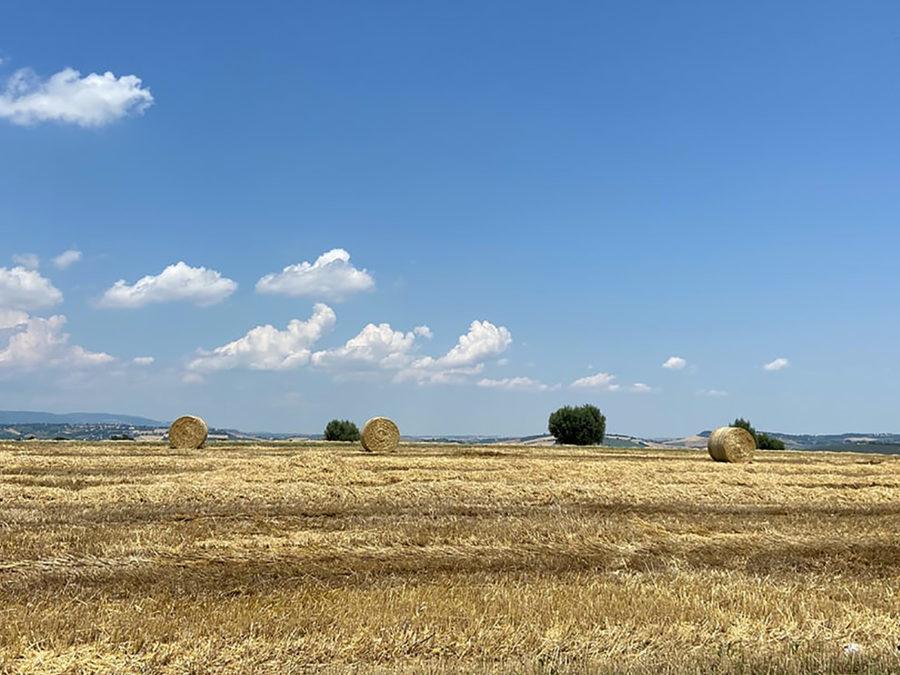 Assegnate le Spighe Verdi 2020 per i comuni rurali: Marche e Toscana in testa
