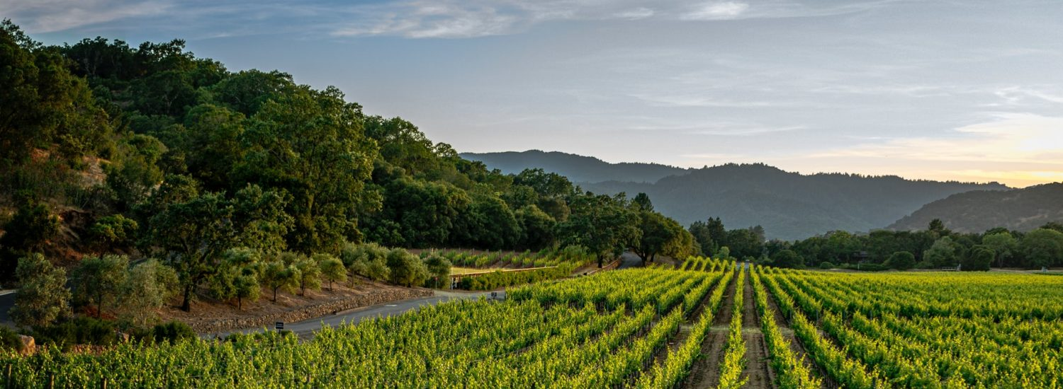 Awaiting autumn, tastings and hospitality in the vineyards