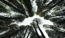 Ripopolare il verde del pianeta, la nuova mission delle aziende…