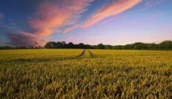 IT e agroalimentare: stalle 4.0 e droni per controllare il…