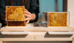 """Se i """"buzz"""" delle api diventano dati e informazioni sulla…"""