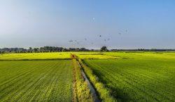 La sfida dell'agro-ecologia raccolta e messa a sistema dalla start…